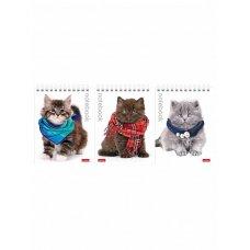 Блокнот 40л А6 Милые котята 004667